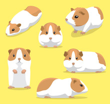 Cute Guinea Pig Poses Cartoon ...