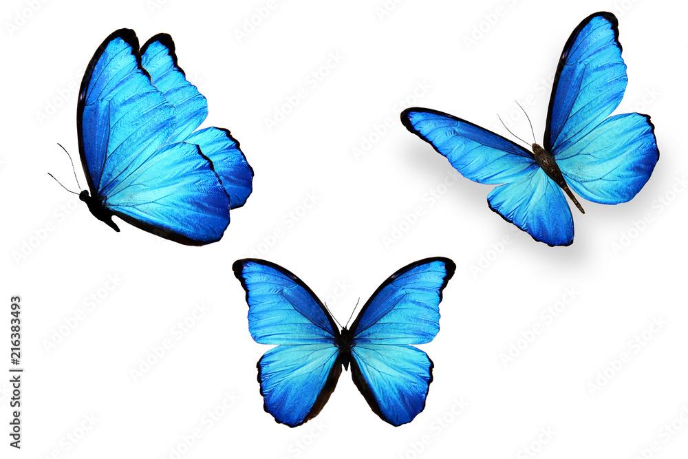 Fototapeta set of blue butterflies isolated on white background