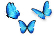 set of blue butterflies isolated on white background