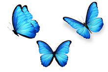 Set Of Blue Butterflies Isolat...