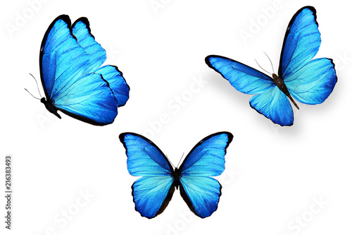 set of blue butterflies isolated on white background Canvas-taulu