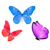 три разноцветных бабочки изолированные на белом фоне
