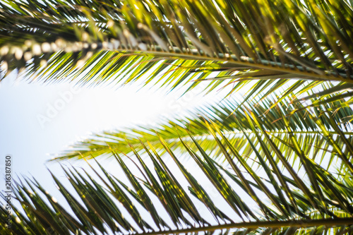 Spoed Foto op Canvas Palm boom Palm tree leaves