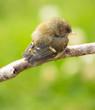 Cute bird sleeping on a branch