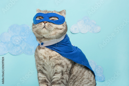 Photo sur Toile Chat superhero cat, Scottish Whiskas with a blue cloak and mask. The concept of a superhero, super cat, leader