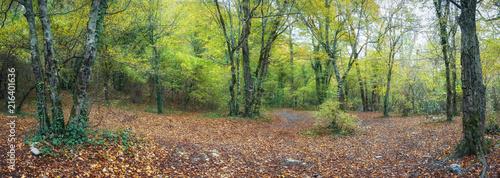 Foto op Aluminium Cappuccino Осенний лес на Кавказе,Краснодарский край, Россияя