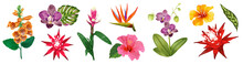 Tropical Watercolor Flowers Co...