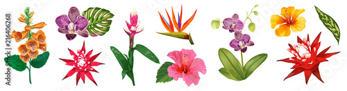 Tropical Watercolor Flowers Collection. Floral Set with Exotic Flowers Hibiscus, Orchid, Lily. Botanical Design for Wedding, Wallpaper, Fabric, Invitation. Vector illustration