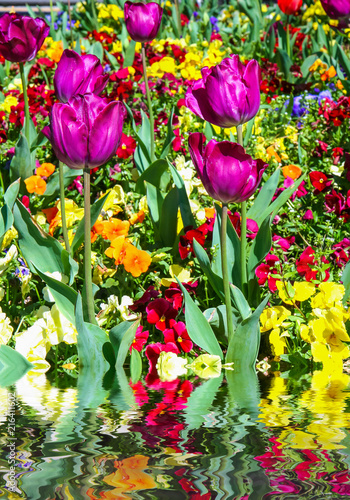 Purple Irises By Water
