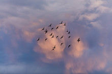 Birds Flying Into Sunset Clouds
