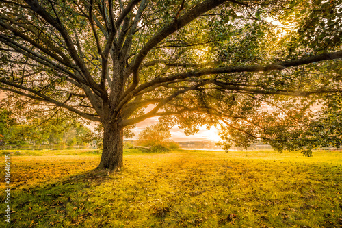Autumn sunset in Parsippany, New Jersey, on the shore of Parsippany lake. Sun Rays burst through a large tree canopy.