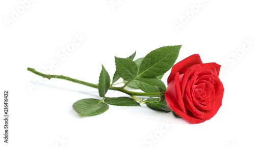 obraz lub plakat Beautiful red rose flower on white background