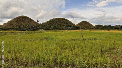 Fotobehang Bleke violet The Chocolate Hills of Bohol island. Central Visayas-Philippines. 0615