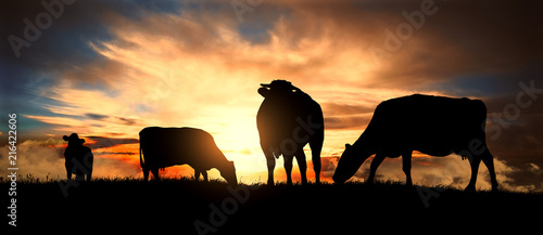 Tablou Canvas A herd of cows at sunset
