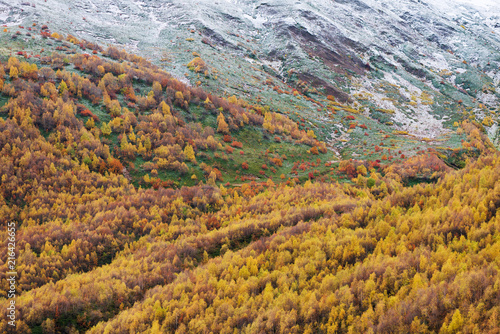 Foto op Canvas Herfst Autumn Landscape with birch forest in the mountains