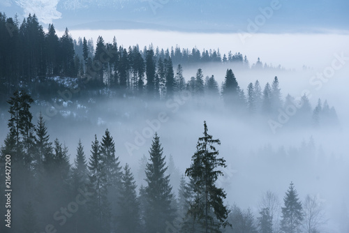 Poster Ochtendstond met mist Spring landscape with morning mist in the mountains
