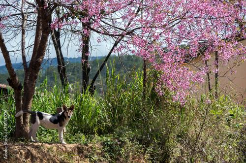 Spoed Fotobehang Purper the dog looks home