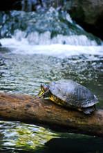 Turtle Log