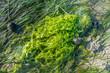 canvas print picture - Algen bei Ebbe im Wattenmeer