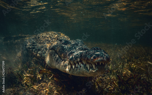 Photo Crocodile underwater