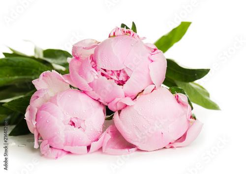 Fotografie, Obraz  Pink peony flower isolated on white background
