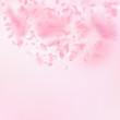 Sakura petals falling down. Romantic pink flowers semicircle. Flying petals on pink square backgroun