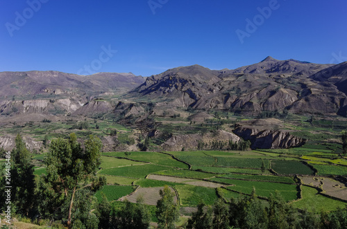 Poster Zuid-Amerika land Colca Canyon panorama, Peru , South America. Incas to build Farming terraces.