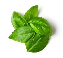 Basil Leaves Isolated On White...