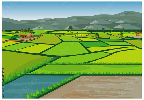 Obraz na plátně large paddy field vector design