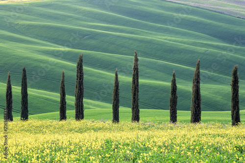 Foto  Cypress trees and hills