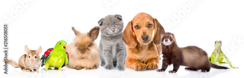 Large group of pets together in front view. Isolated on white background © Ermolaev Alexandr