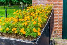Basket Full Of Orange Carnation Flowers