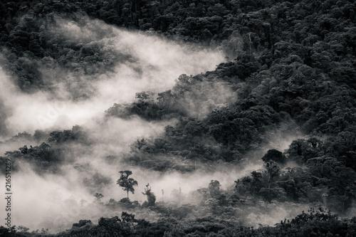 Photo Paesaggio sulla Foresta amazzonica dell'Ecuador