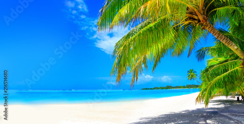 Obraz Dream beach with palm trees on white sand and turquoise ocean - fototapety do salonu