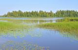 Wetland lake Sestroretsky Razliv.