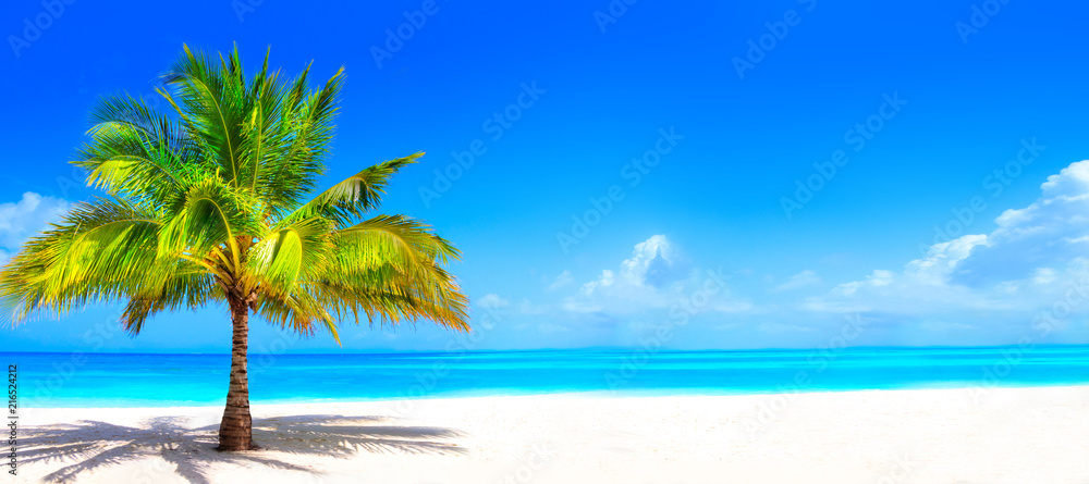 Fototapety, obrazy: Surreal and wonderful dream beach with palm tree on white sand and turquoise ocean