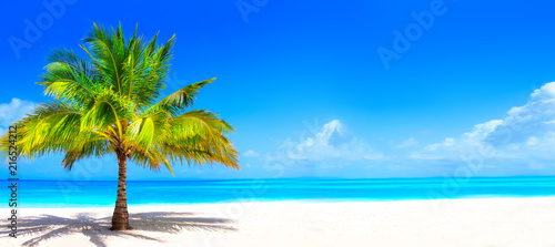 Fotografía  Surreal and wonderful dream beach with palm tree on white sand and turquoise oce
