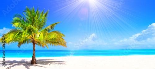 Palmier Surreal and wonderful dream beach with palm tree on white sand and turquoise ocean