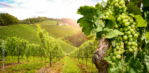 La pose en embrasure Vignoble Vineyards with grapevine and winery along wine road in the evening sun, Austria Europe