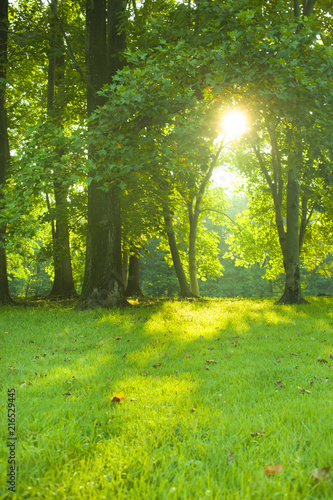 Fototapeten Wald morning forest