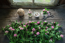 Pink Clover Flowers, Mortar, Clover Tincture Or Infusion, Scissors And Jute On Old Wooden Table Inside The Retro Village House.