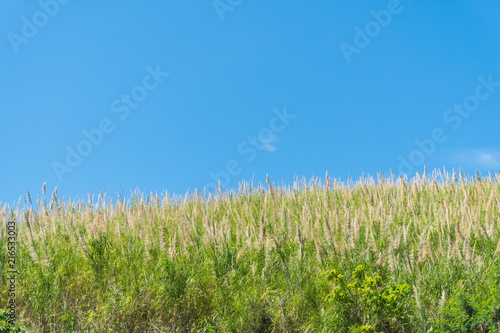 Foto op Aluminium Platteland Grass flower field and blue sky in the morning