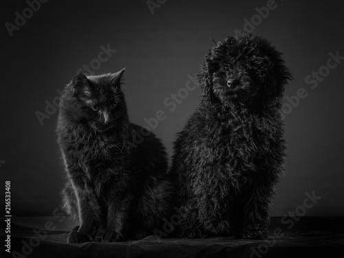 Fototapeta cane e gatto seduti insieme
