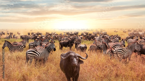 In de dag Buffel African buffalo and zebra in the African savannah at sunset. Serengeti National Park. African artistic image.