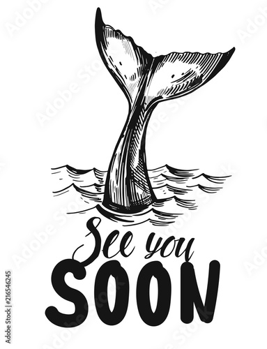 Fototapeta premium Ogon wieloryba. Ręcznie rysowane ilustracja atramentu przekonwertowana na wektor