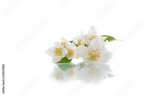 Foto op Plexiglas Magnolia blossoming jasmine flowers