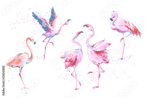 Canvas Prints Flamingo Bird Set of 5 vector watercolor imitation style sketchy flamingos isolated on white. Vector illustration of pink flamingo