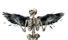 Human Skeleton Decorated With ...
