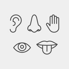 Sense Organs Flat Vector Icons