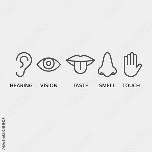 Foto  Sense organs flat vector icons